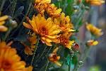 bloemen-en-planten